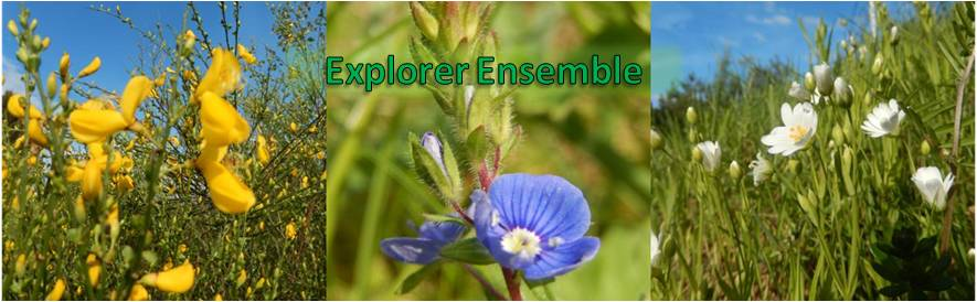 Explorer Ensemble