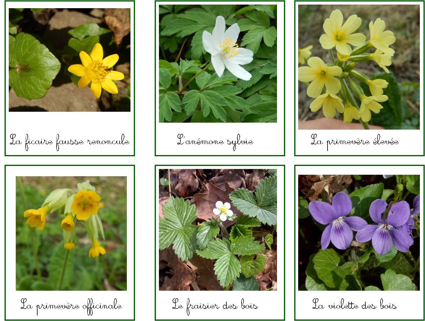 Cartes de nomenclature : les fleurs des bois - Explorer Ensemble
